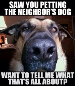 52439158e2239e6ac47561b1863f126e--animal-quotes-animal-humor